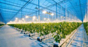 Intel та Microsoft вирощують огірки (відео)