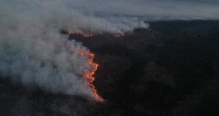 Вигоріло 5% територій Чорнобильського заповідника